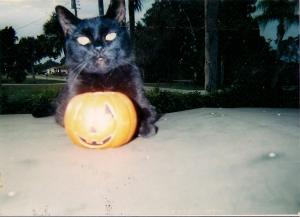 My kitty-Noir 22 last Aug 26