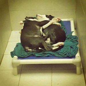 Pup cares for blind brother